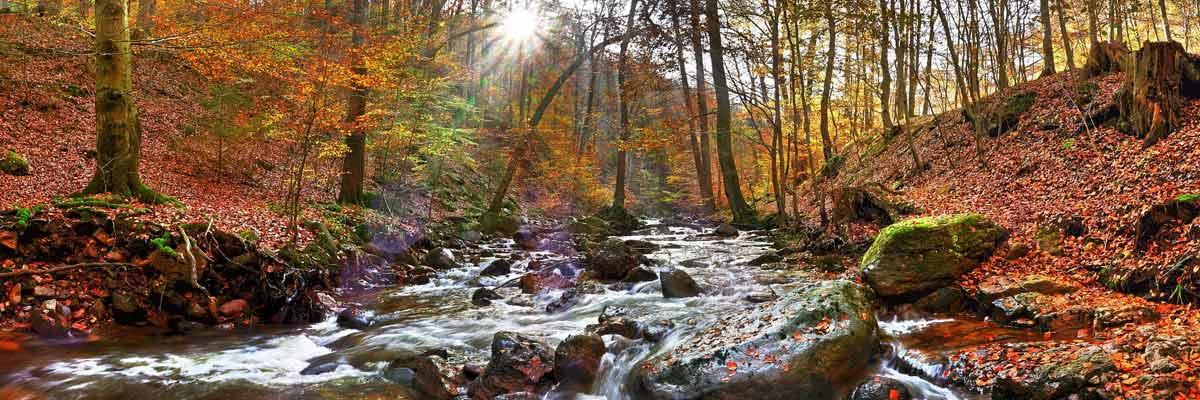 Ein Bach im Wald im Herbst