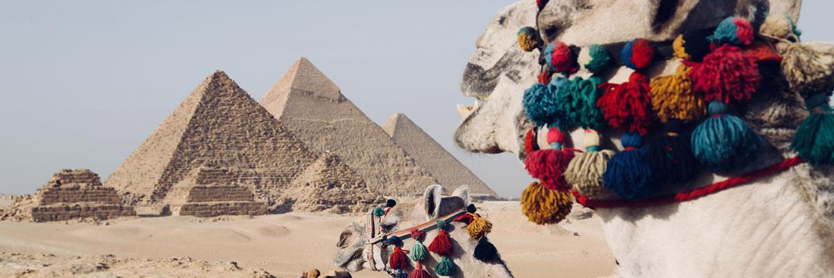 Kamele vor den Pyramiden in Ägypten